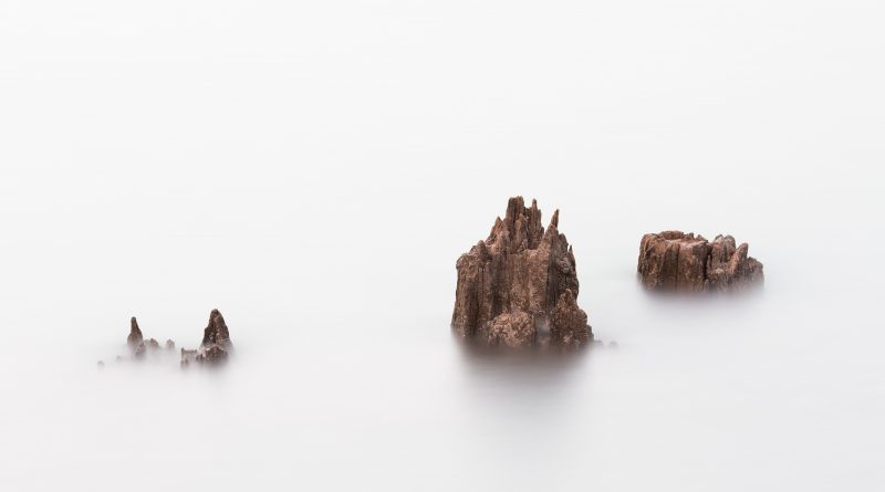 tree-stumps